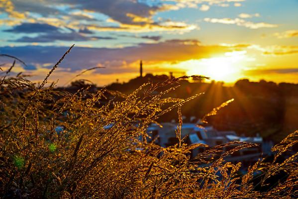 Golden Grasses at Sunset