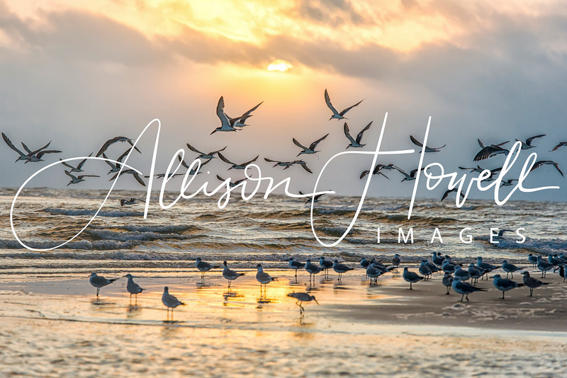Birds' Good Morning 2018