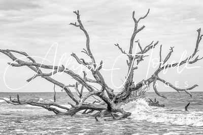 B&W tree in surf 2018