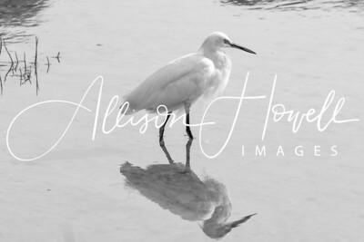 Egret Reflection B&W2018