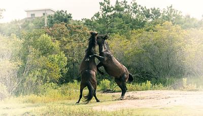edited horses