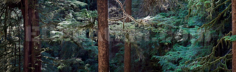 Avatar Grove (Panorama) 18x59 inches, laminated metallic  photo paper float mounted on aluminum. $2310.00, 3/10