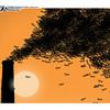 Dec. 16, 2009 <br /> John Sherffius Editorial Cartoon<br /> Dailycamera.com Boulder, CO