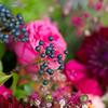 2015-Spring-EAbride-Inspiration-003