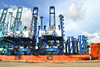 Two, 155-foot-high cranes arrived at the Port of Charleston on Aug. 5, 2016, from China. The cranes extend 40 feet higher than existing ones, enabling the port to handle larger ships. (Photo/Liz Segrist)