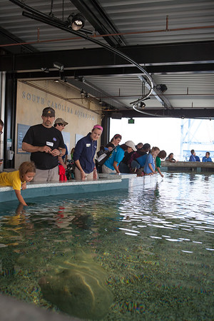 SC Aquarium Shark Shallows May 2015