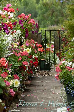 Annual container garden path_2625