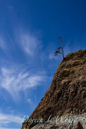 Blue sky seagull in flight_2786