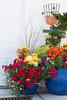 Autumn Container Garden_6869