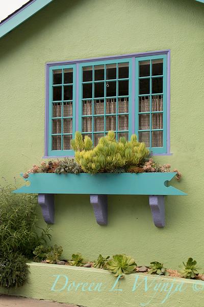 Succulent garden Window box_6845
