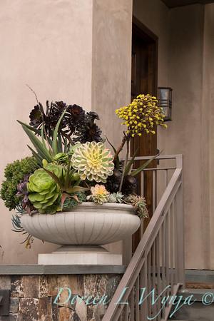 Succulent container garden_6934