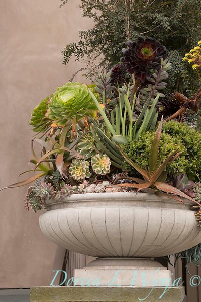 Succulent container garden_6938