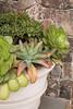 Succulent container garden_6925