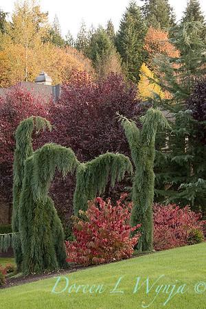 Sequoiadendron giganteum 'Pendulum'_1937