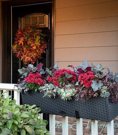 Sedum - Heuchera - Mum fall filled railing box_7377