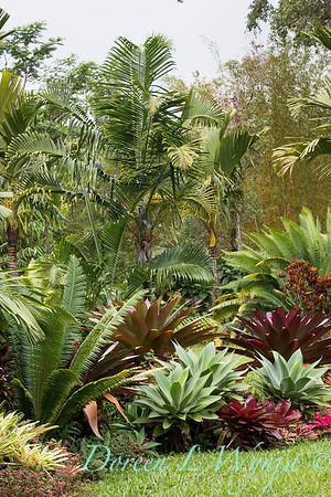 Alcantarea Imperialis tropical landscape_0910