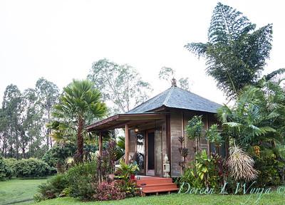 Caryota obtusa - gigas - Bali living structure - tropical landscape_3677