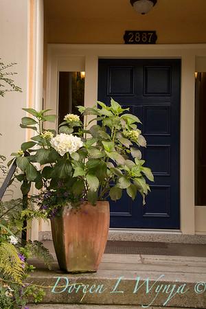 Hydrangea white Container Garden_6891