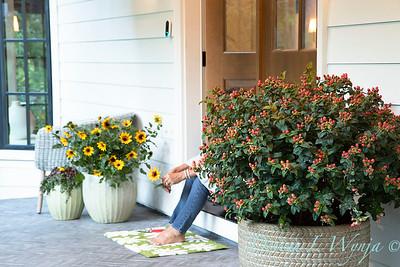 41805 Hypericum x inodorum 'KOLPINOT' FloralBerry Pinot front door_1245