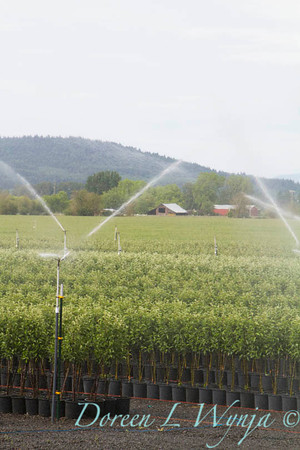 Can Yard Sprinklers_4706