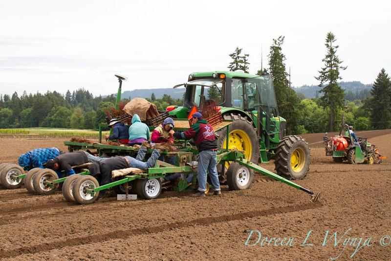 Planting_4716