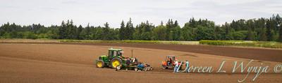 Planting_4732