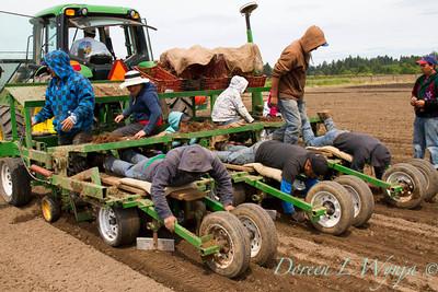 Planting_4702
