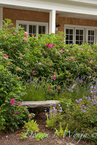 Rosa rugosa - Lavandula - Geranium - Garden bench_3297