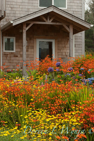 Chrysanthemum Crocosmia meadow_011