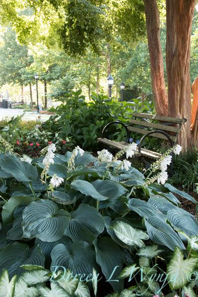 Hosta - Park bench_0842