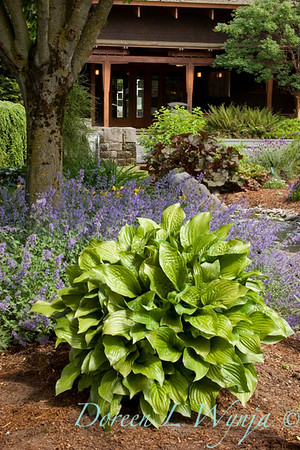 4173 Hosta Royal Standard_022_72ppi