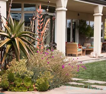 Aloe vaombe - Aloe vaombe - Cistanthe grandiflora 'Jazz Time' - Aeonium - Aloe - Mediterranean landscaped porch setting_0838