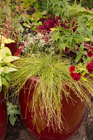 Red pottery container garden_0210