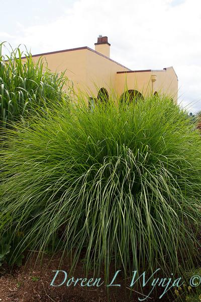 grass_5495