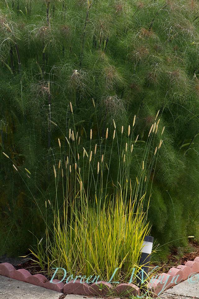 grass_5493