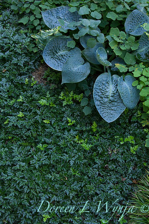 Hosta garden textures_0292