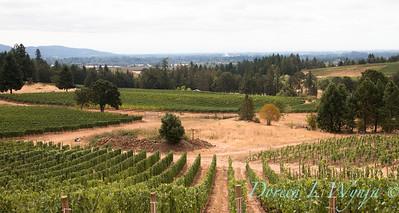 Vidon Winery_8502