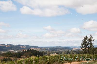 Vidon Winery_8500