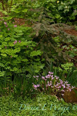 Woodland Garden_7675