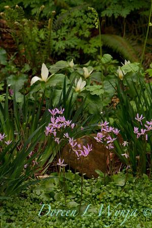 Woodland Garden_7679