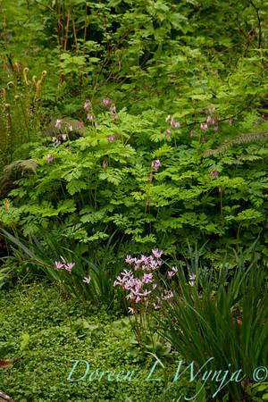 Woodland garden_7666