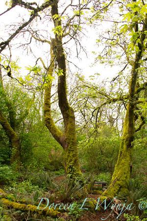 Woodland garden_7794