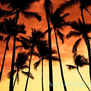 Evening Pause_018_7x7