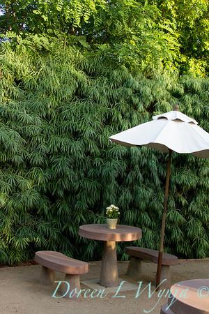 Podocarpus henkelii_001