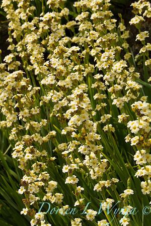 Cottage Garden_0984