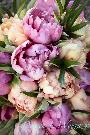 1958 Peaonia 'Singing in the Rain' - 5259 Peaonia x 'Smith Opus 2' Takara cut flowers_1064