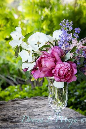 5259 Peaonia x 'Smith Opus 2' Takara - Cornus 'Venus' cut flowers_0974