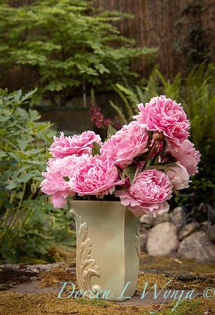 Paeonia lactiflora 'Sarah Bernhardt - Peony cut flowers_1195