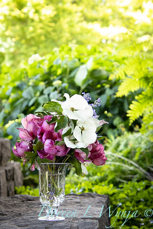 5259 Peaonia x 'Smith Opus 2' Takara - Cornus 'Venus' cut flowers_0962