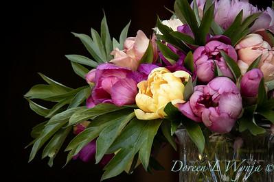 1958 Peaonia 'Singing in the Rain' - 5259 Peaonia x 'Smith Opus 2' Takara cut flowers_1060